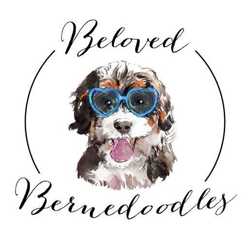About Us Beloved Bernedoodles