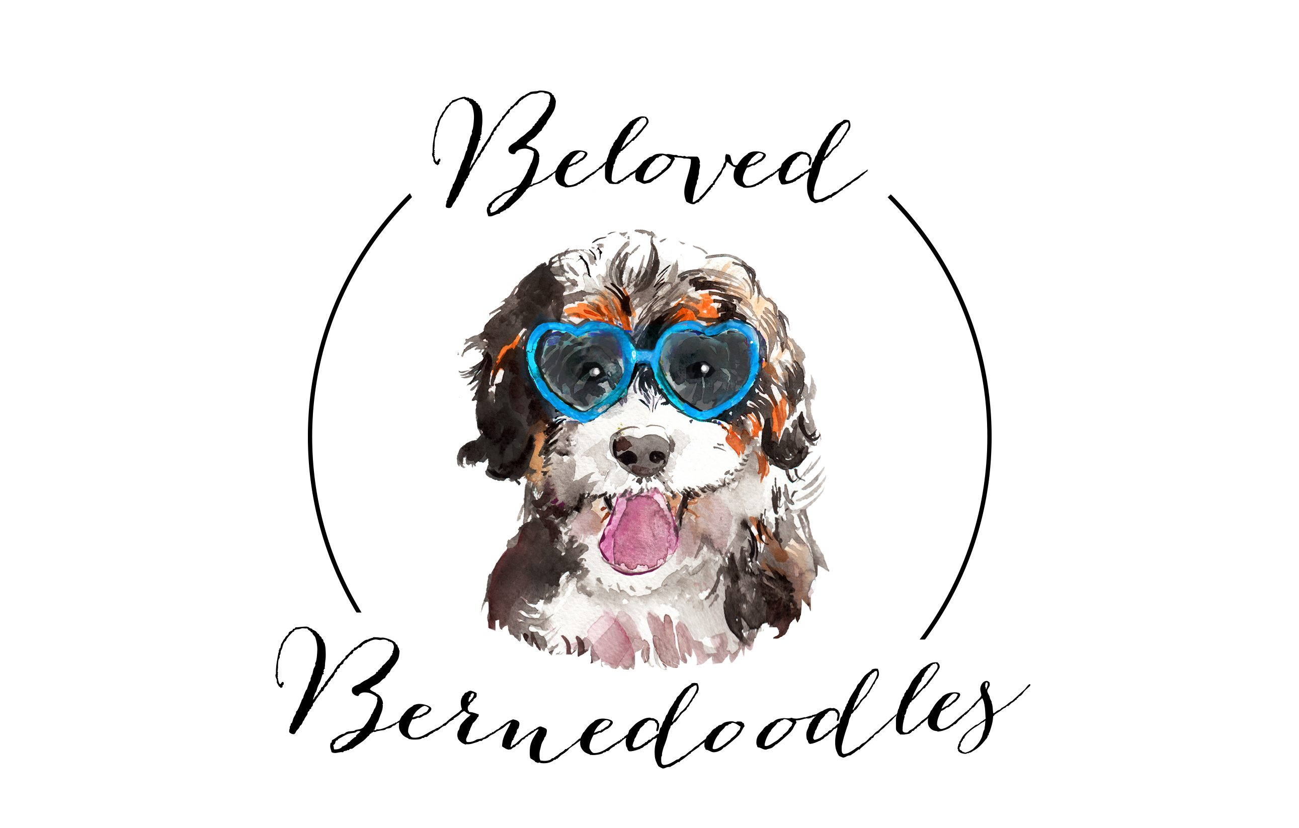 Beloved Bernedoodles
